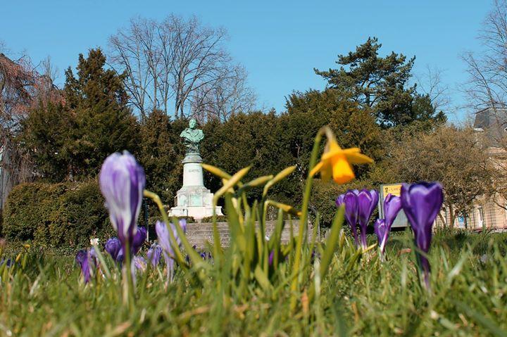 Frühling am Scheffelplatz