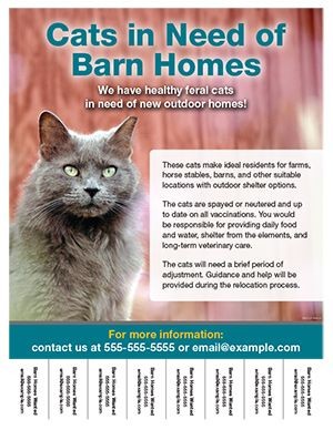 barn cat flyer