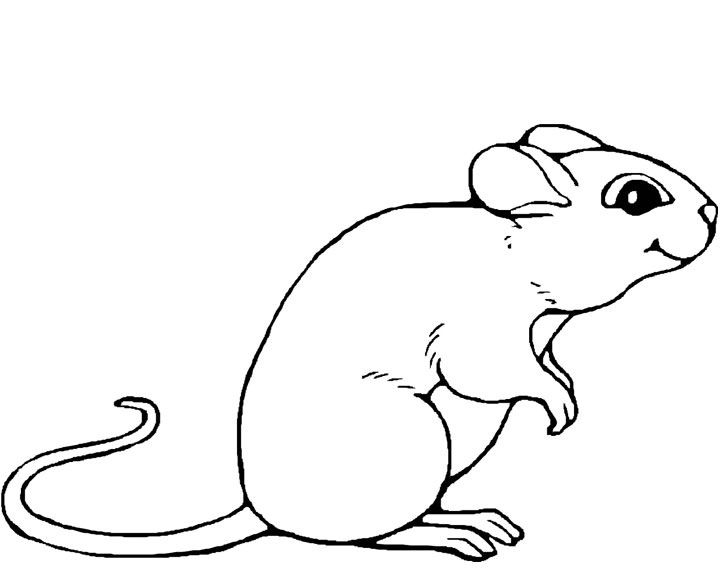 Book Mouse Coloring Pages