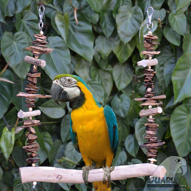 Macaw Swing