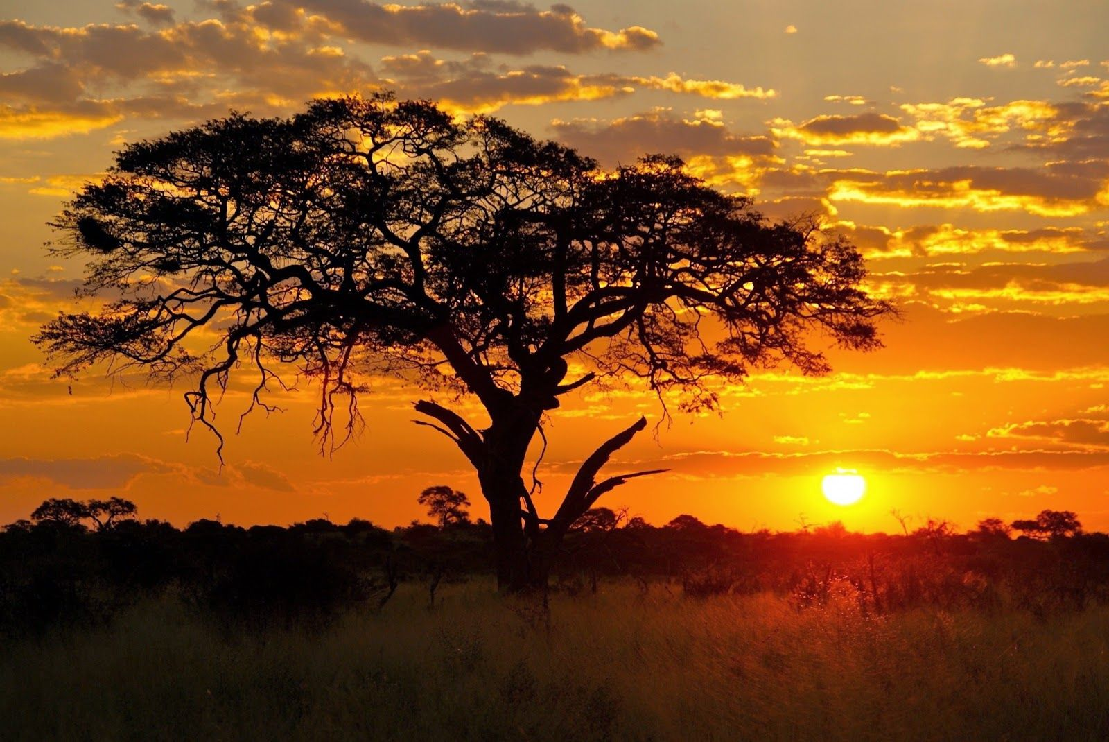 Idea by Mary Marlene on painting | Sunset, Africa painting ...