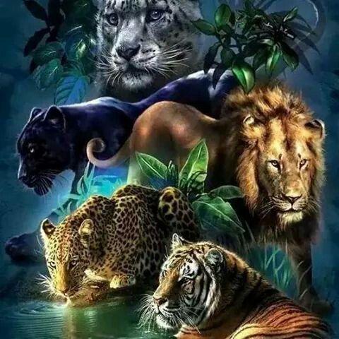 Mis animales