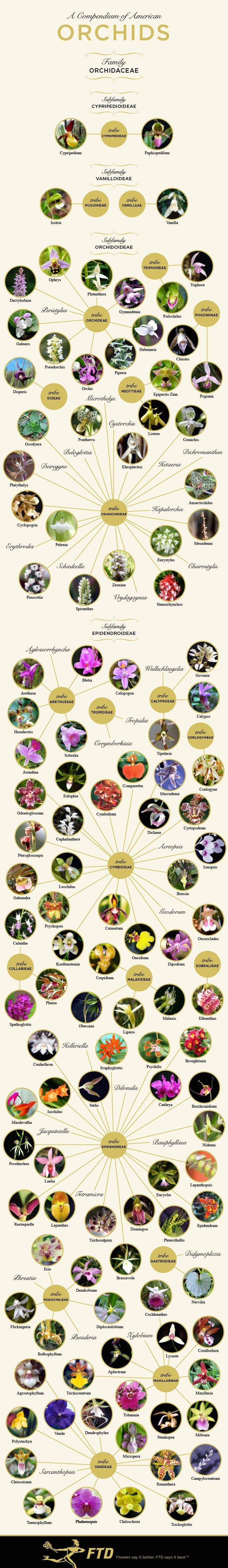 Types of Orchids: A Visual Compendium | 1000 in 2020 ...
