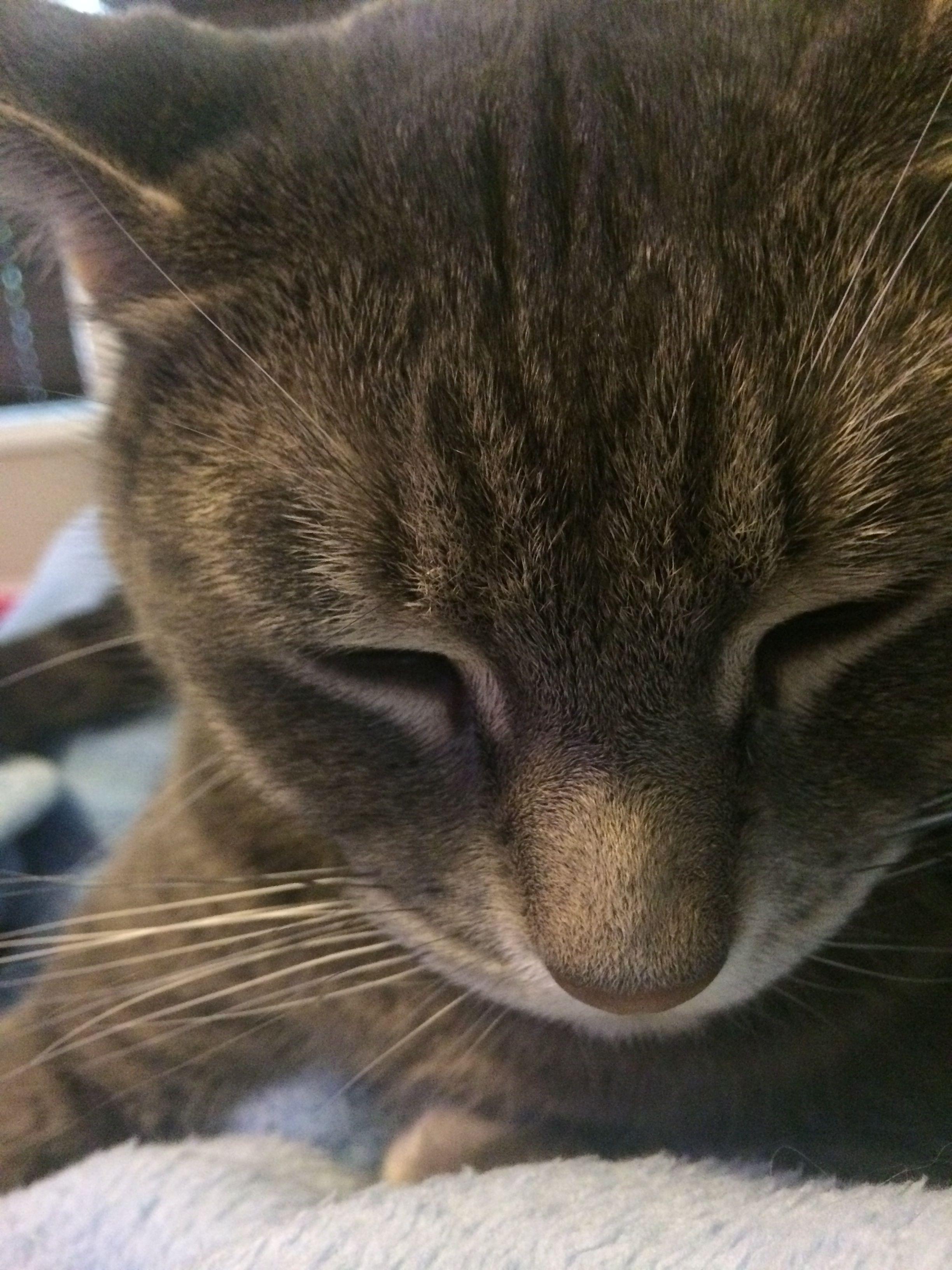He follows me everywhere ) Kittens cutest, I love cats