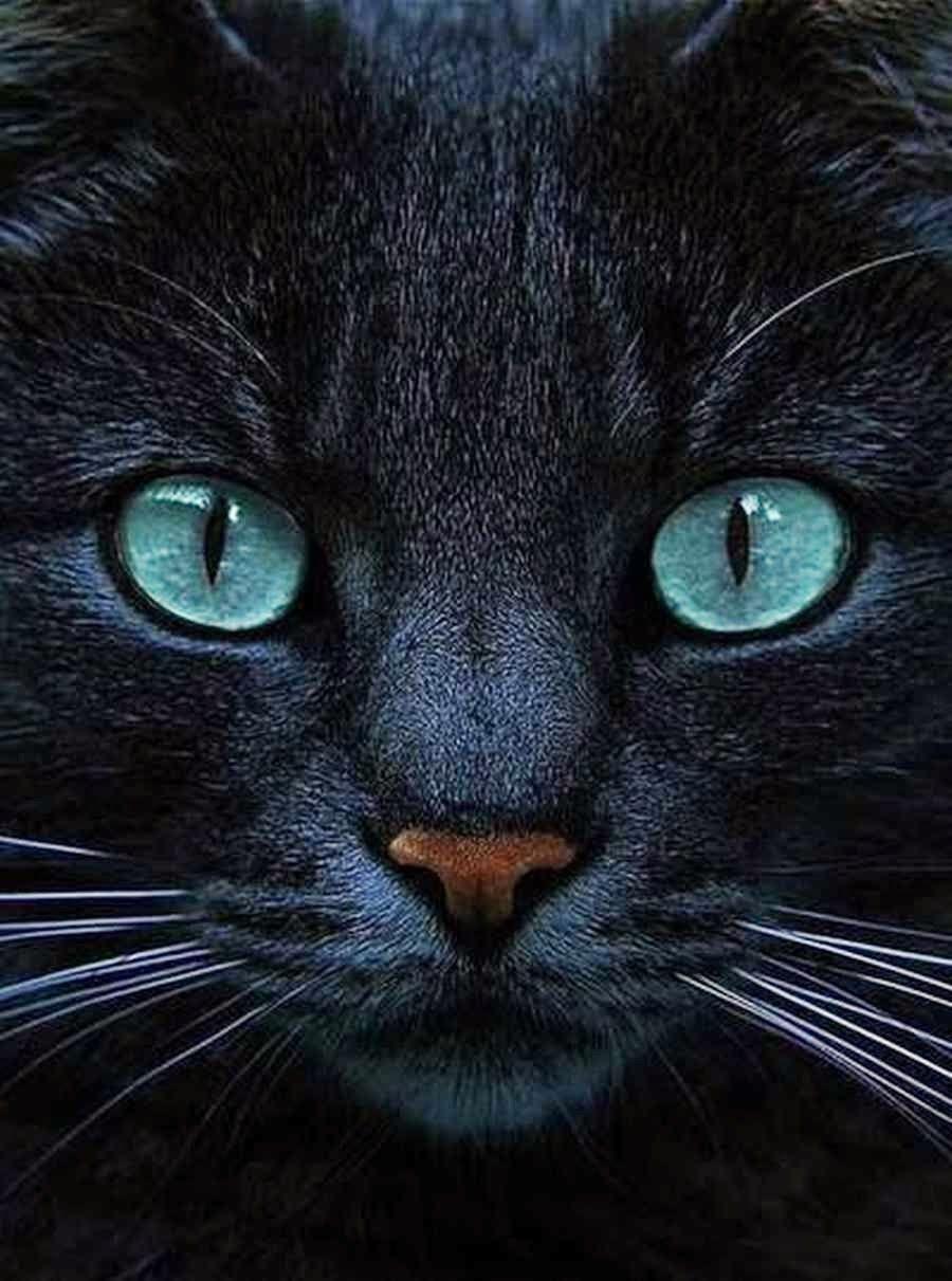CATS*GATS*GATOS