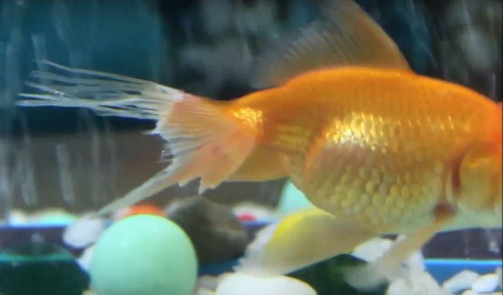 Pin by Fish keeping Guide on Fin rot diease treatment