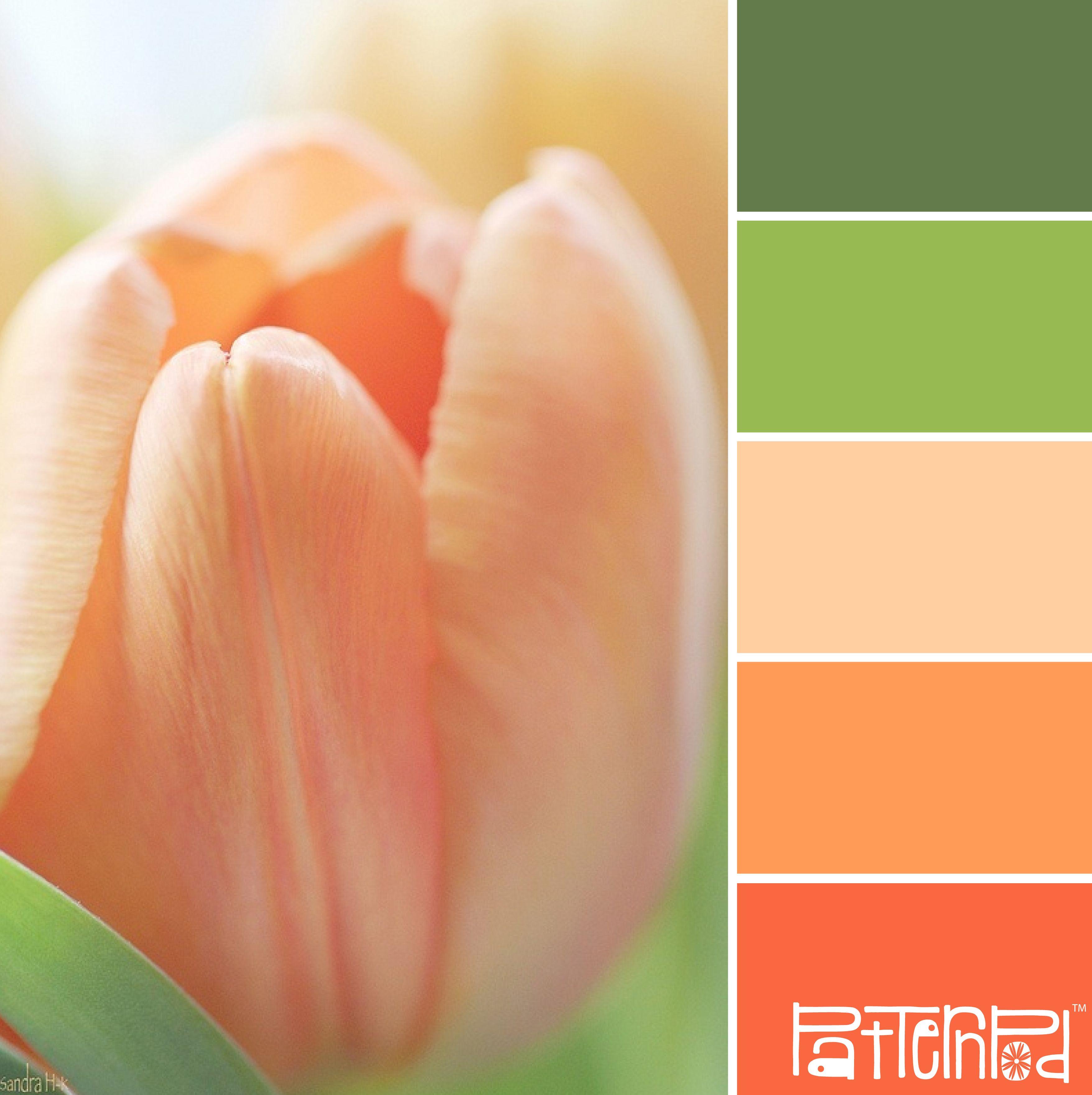 in bloom patternpod patternpodcolor color colorpalettes farbwahl pinterest. Black Bedroom Furniture Sets. Home Design Ideas