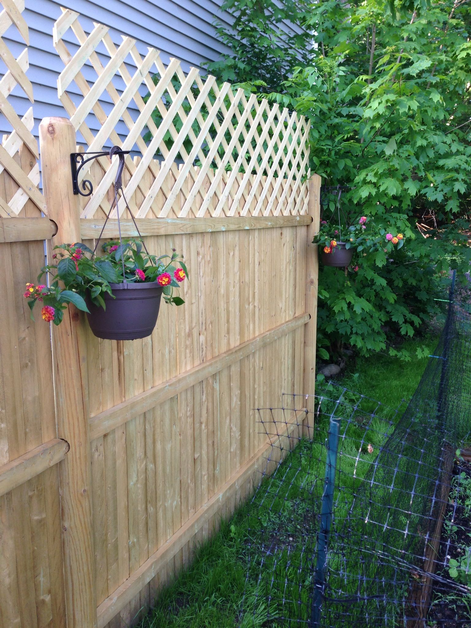 add lattice and hanging plants to your fence super cheap on classy backyard design ideas may be you never think id=67219
