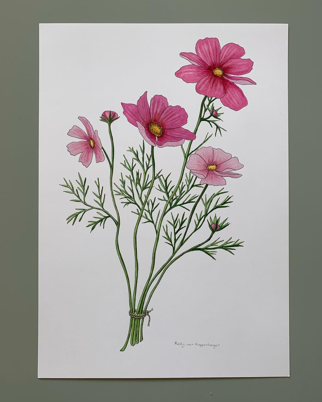 Made This Cosmos Flower I Think I Ll Put Them In My Vegetable Garden This Year Cosmos Flowers Wildf Cosmos Flowers Flower Sketches Flower Painting
