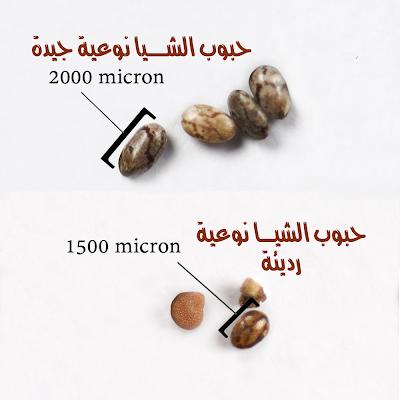 فوائد حبوب الشيا للحسون و الكناري Chia Seeds Benefits Seeds Benefits Place Card Holders