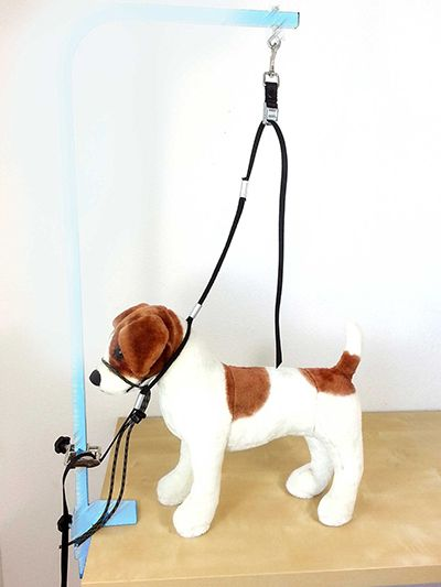 Dog grooming dog stuff pinterest dog and dog grooming supplies dog grooming solutioingenieria Images