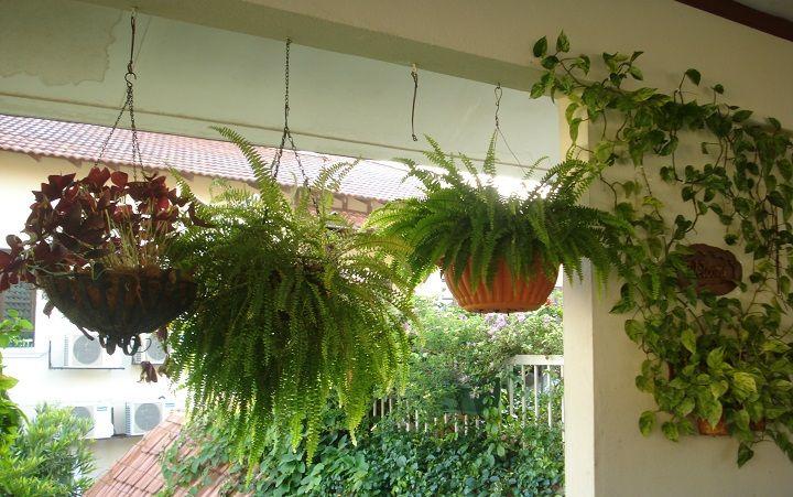 Decoraci n con plantas colgantes jardin pinterest - Plantas de interior colgantes ...