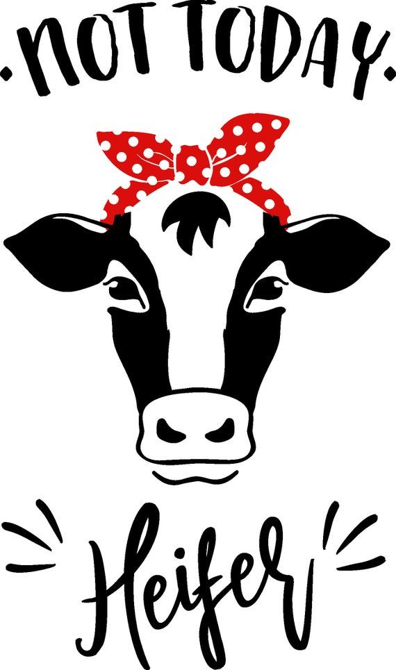 Cricut Cow Svg : cricut, Today, Heifer, Cricut, Projects, Vinyl,, Silhouette, Cameo, Projects,, Funny, Vinyl, Decals