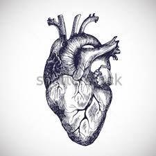 Image result for corazon humano dibujo a lapiz  dibujos  Pinterest