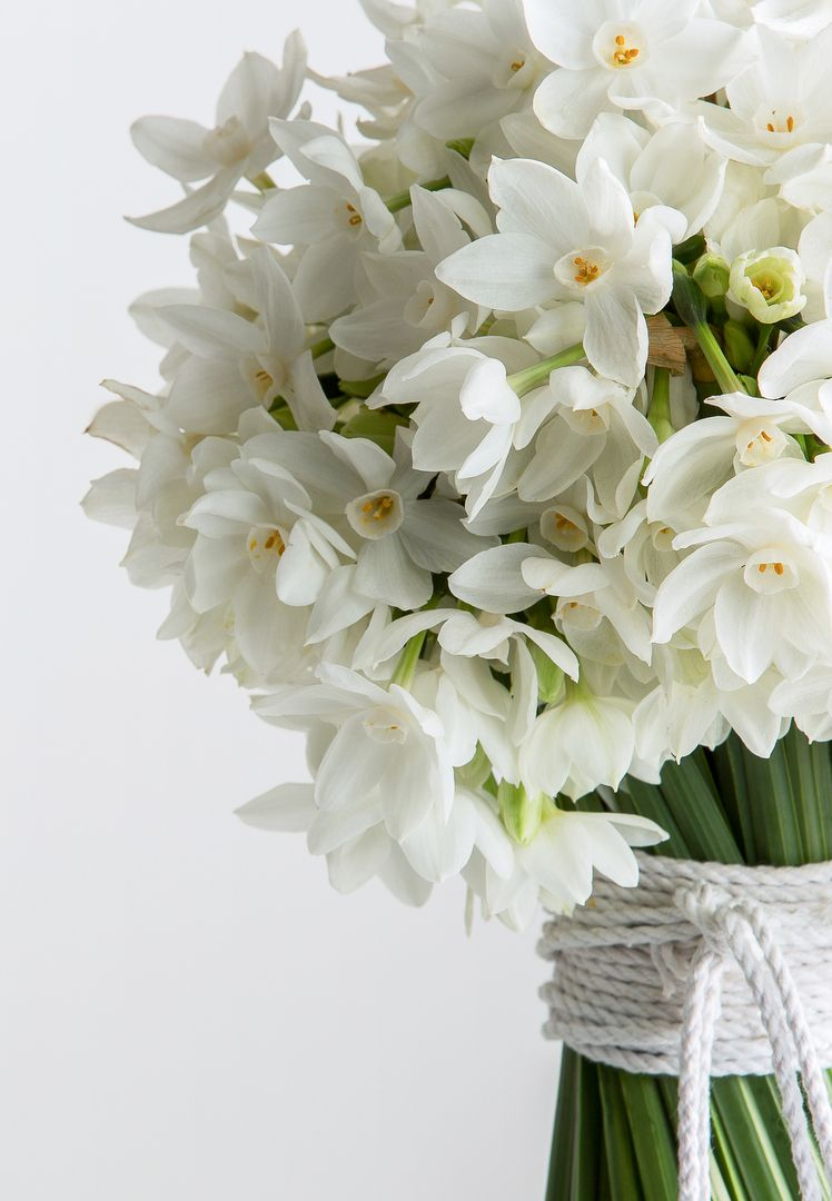 Winter Blooms Live With Us By Green Colour Palette Florists And