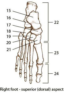 Bones of the Hand and Foot Quiz 1 | Med School | Anatomy, Anatomy