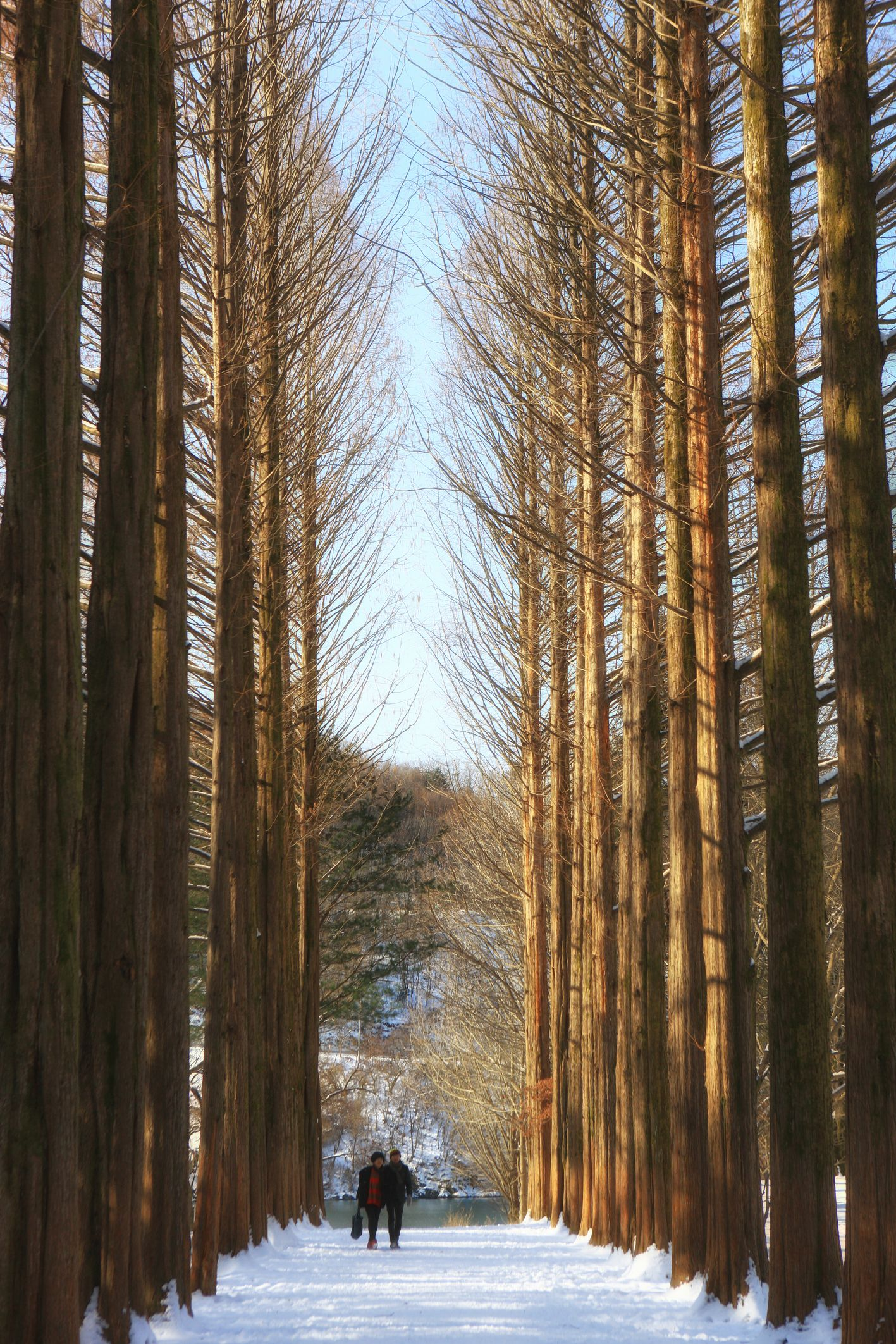 The Metasequoia Lane Is The Most Famous Spot On Nami Island Autumn And Winter Are The Best Season To Enjoy The Tree Lined Roads On The Island