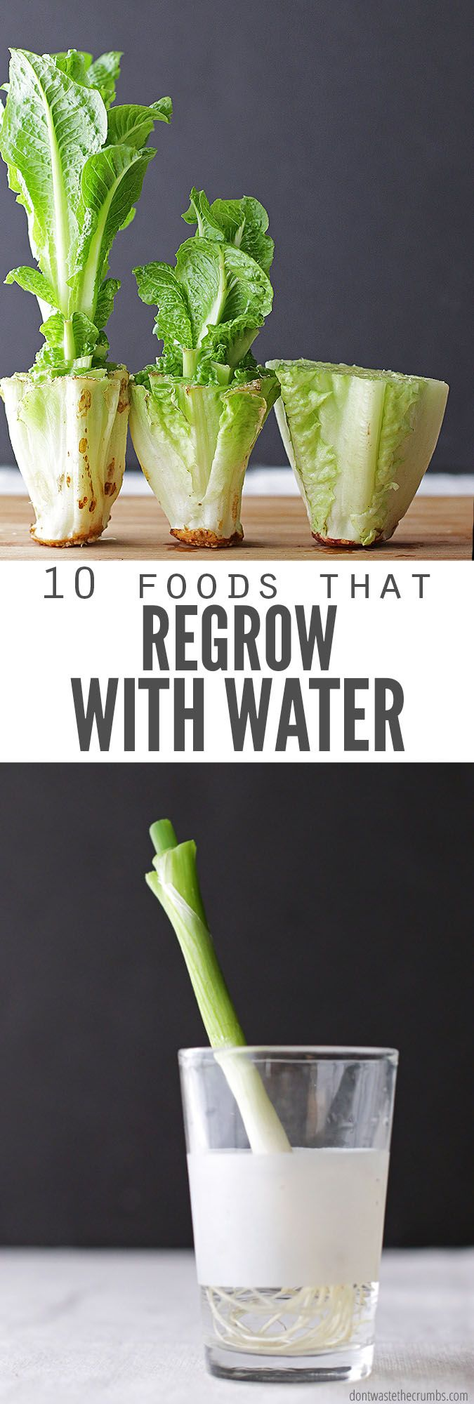 How to Regrow Food in Water: 10 Foods that Regrow Without Dirt #plantingdiysimple