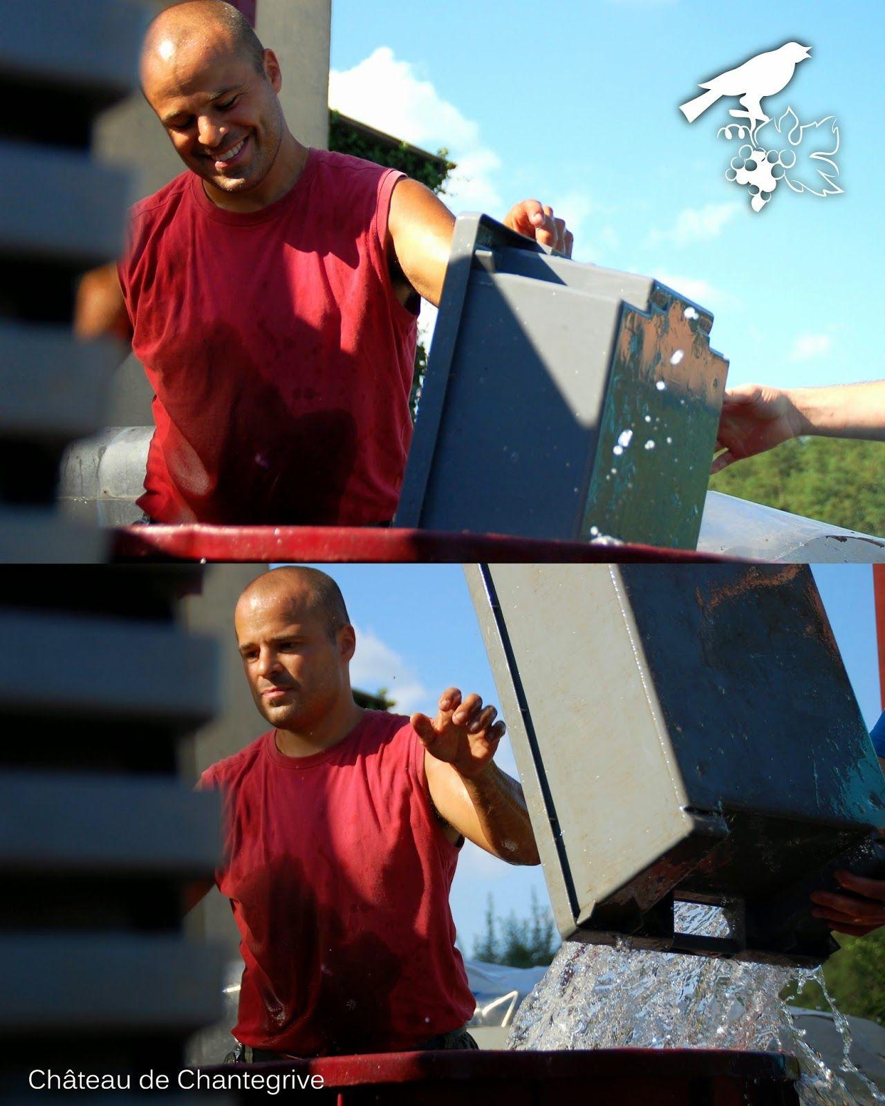 De la vigne au chai - reportage photo ! Chantegrive - harvest . boxes