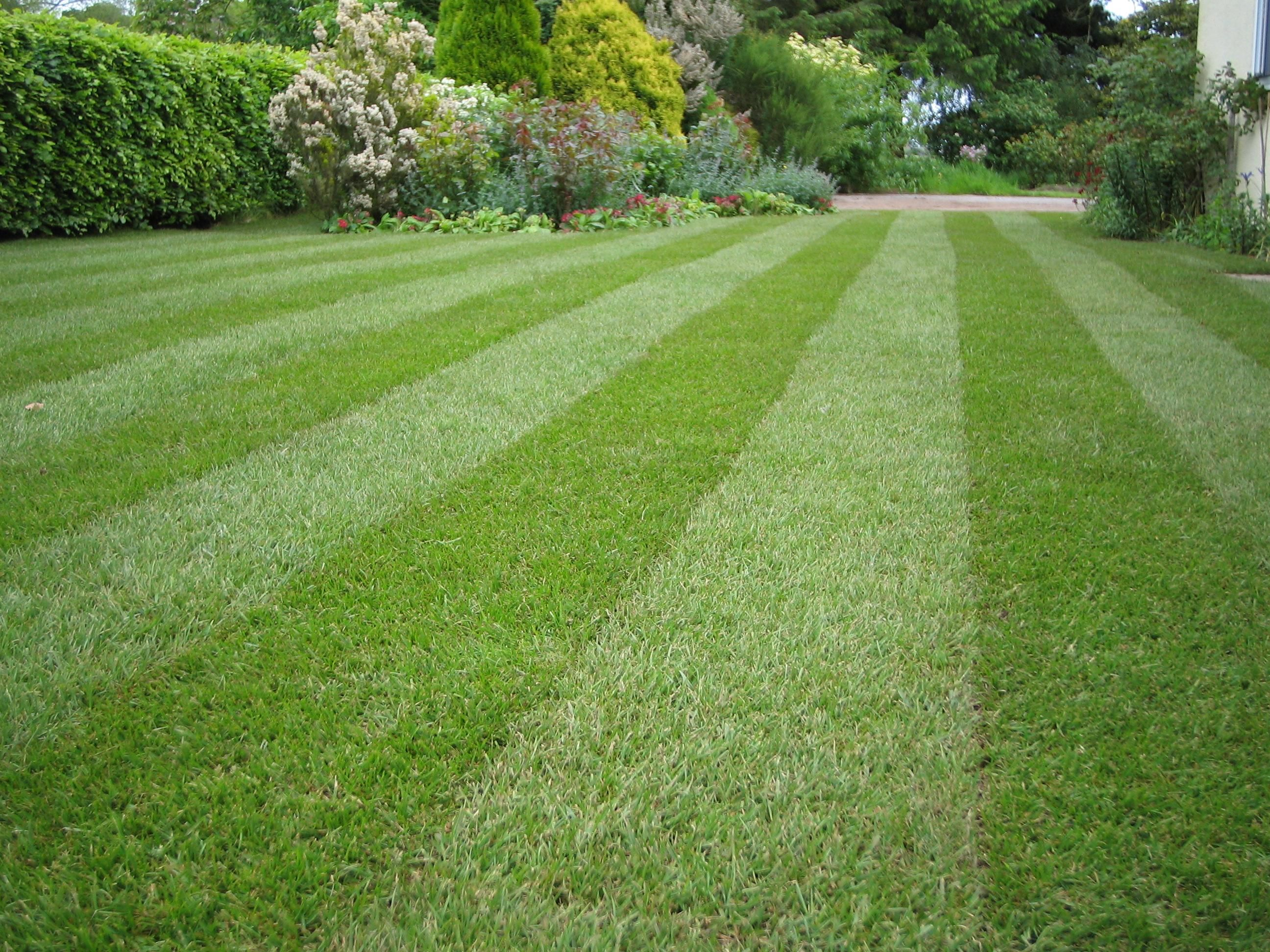 MOSS IN LAWNS ELIMINATED WITHOUT RAKING USING MO BACTER ORGANIC