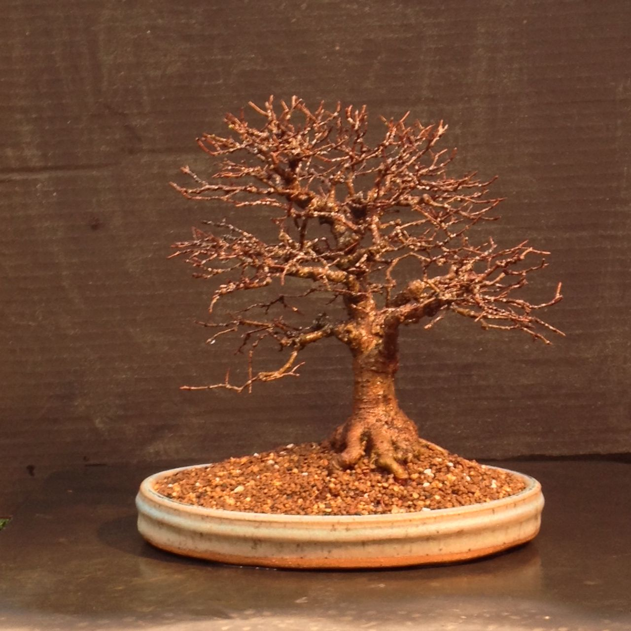 Quite An Honor For Rodney Clemons Of Allgood Bonsai To Plant This 25 Year Old Elm In One Of My Oval Shohin Pots Bonsai Pots Bonsai Plants
