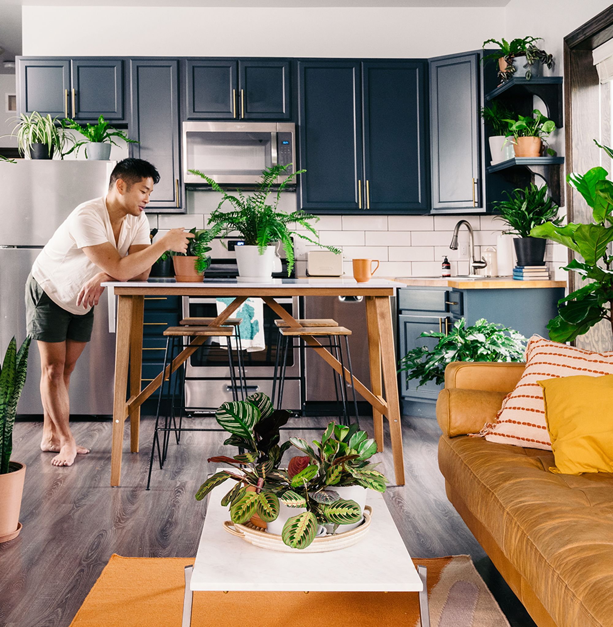 House Plants For Shady Rooms: Houseplants Delivered Straight From Our Greenhouse. Free