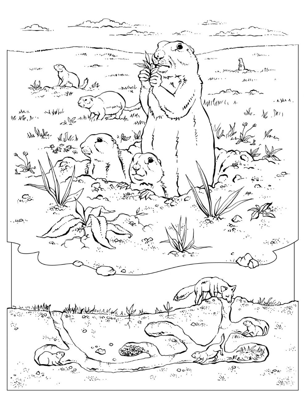 Coloring Book Animals J To Z Dog Coloring Book Dog Coloring Page Coloring Books