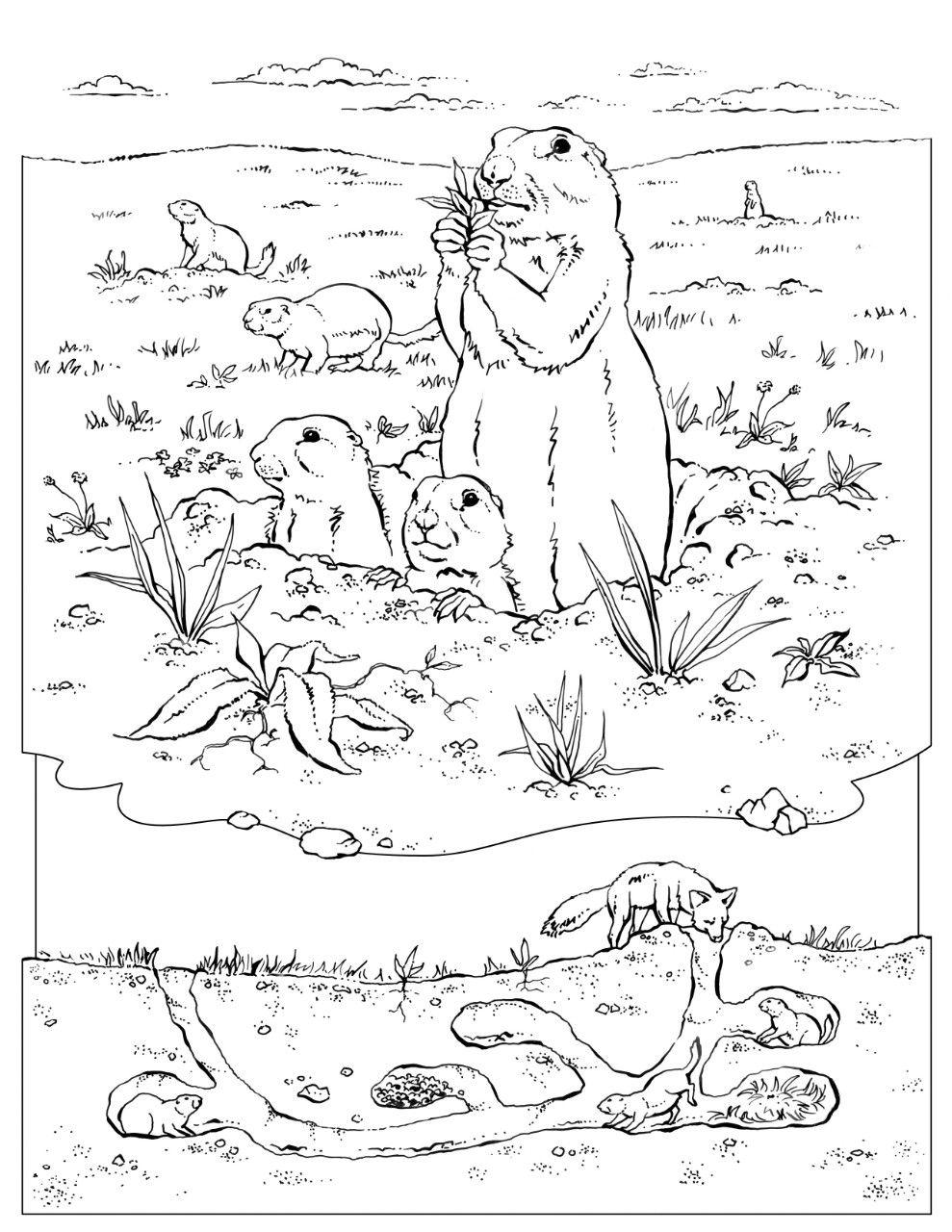Prairie Dog Coloring Thumb