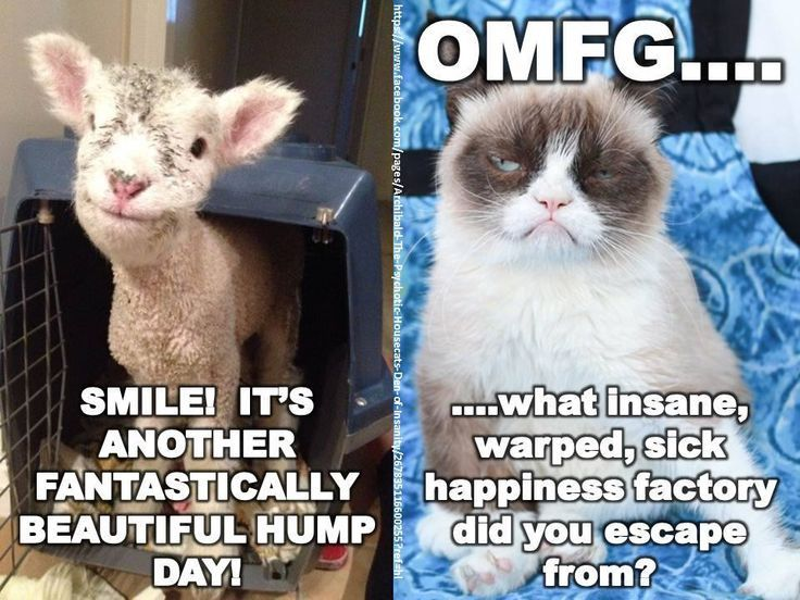 Hump day funny. Work humor, Kittens funny, Funny motivation