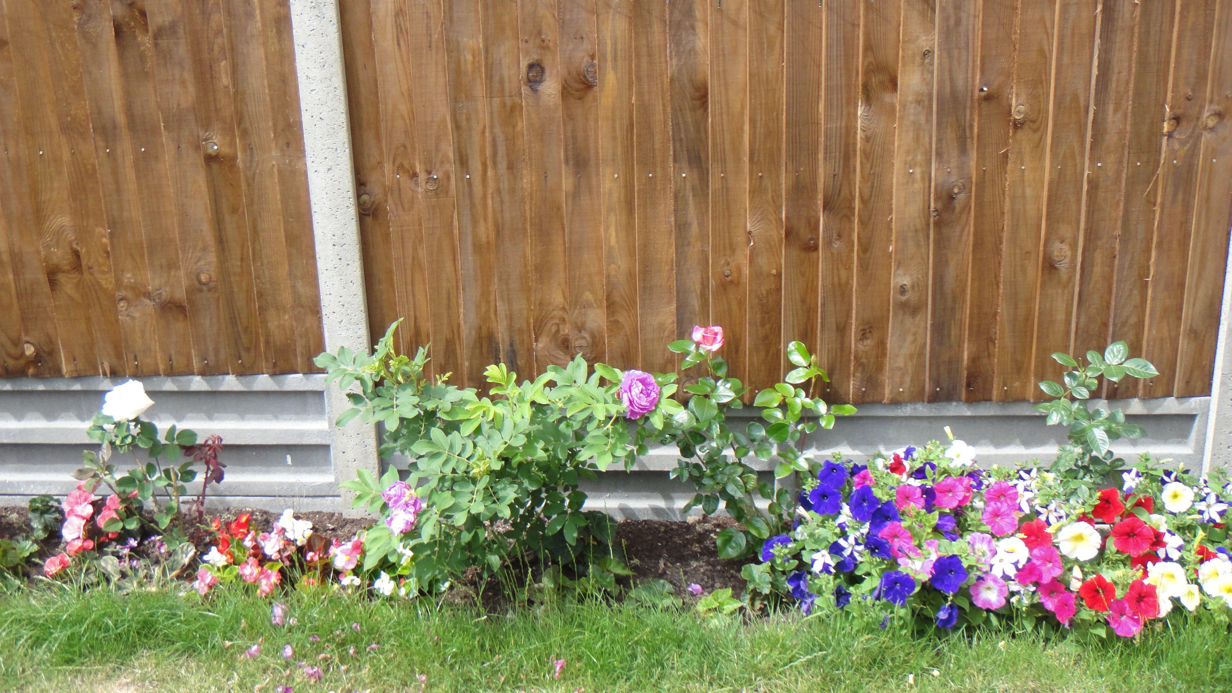 Pin by Janek Farrier-Smith on Garden Project | Pinterest | Garden ...