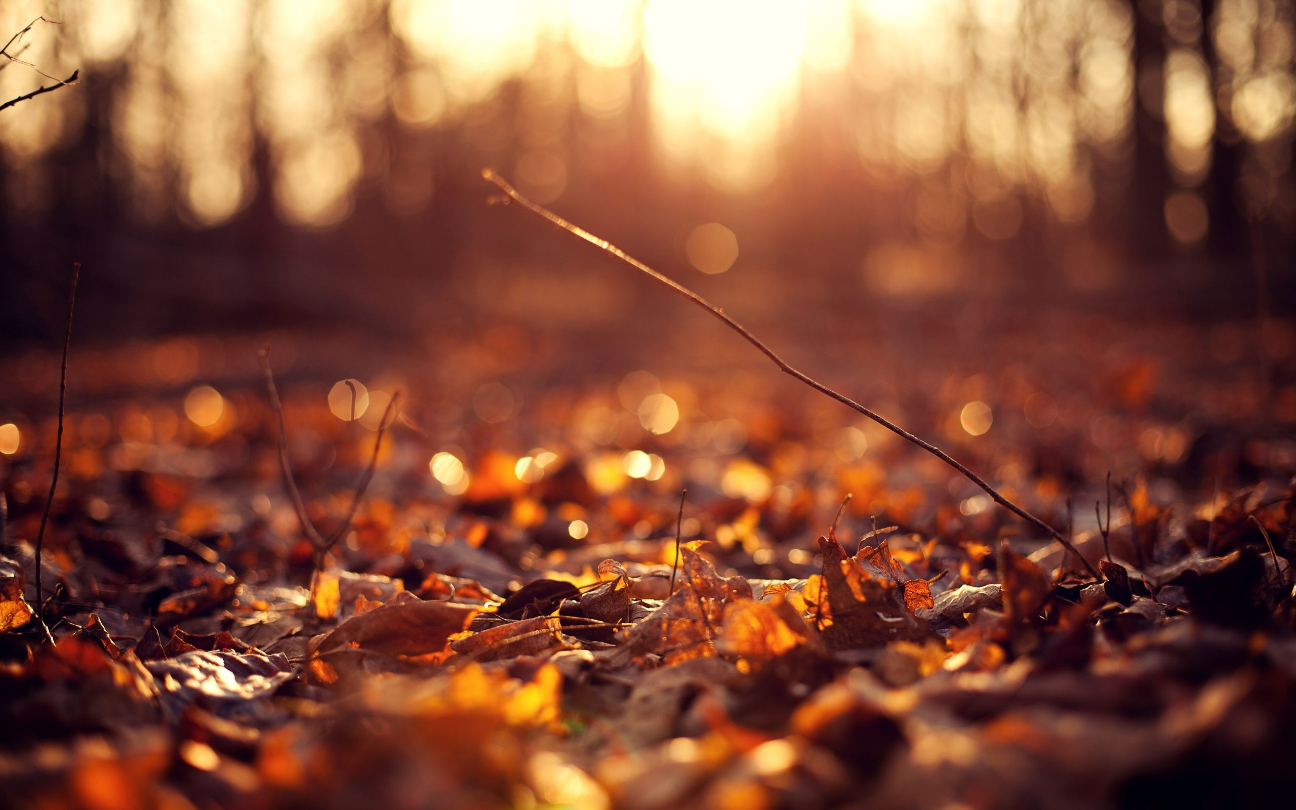 Macro Leaf Autumn Wallpaper