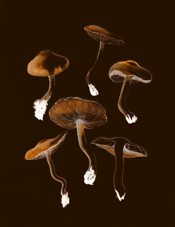 Botanic - Andreas Lie