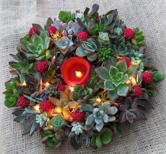 Holiday Succulent Wreath wtih Festive by SucculentSolutions