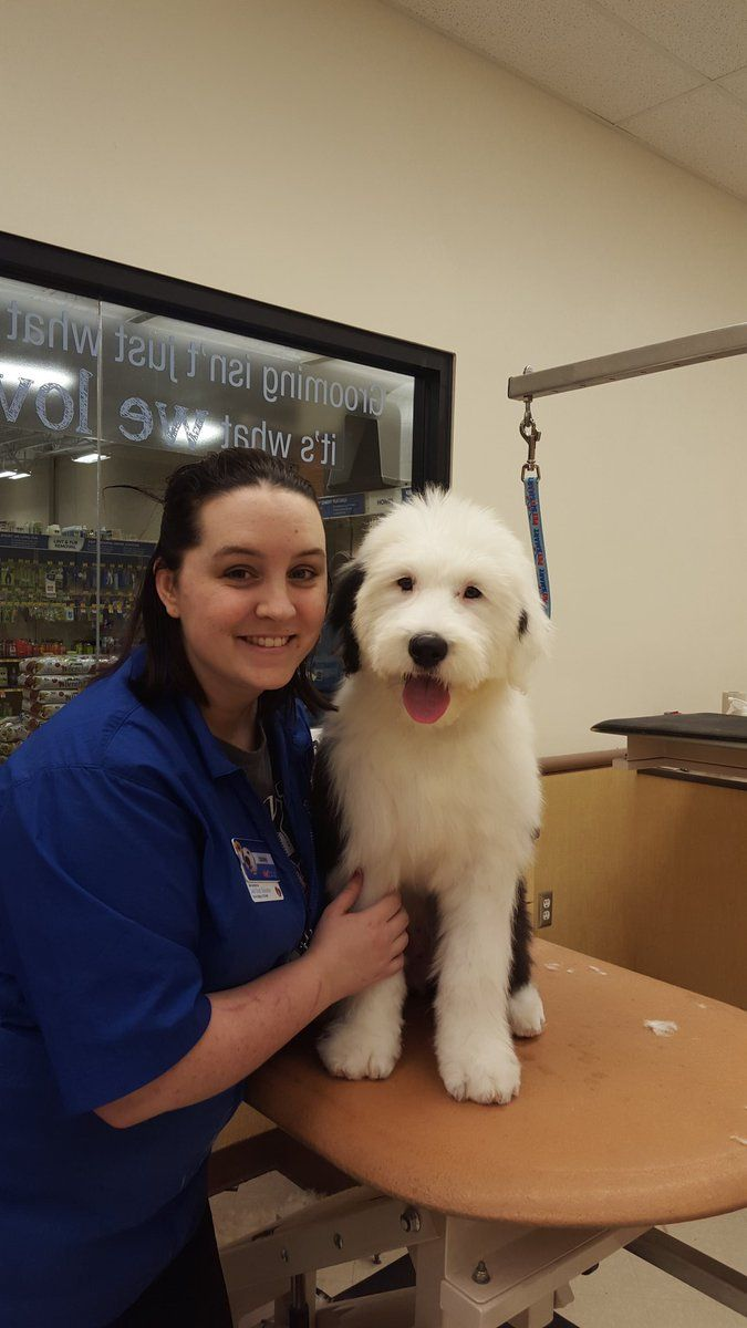 Spring Is The Perfect Time To Freshen Up Your Pet S Look Get Started At The Grooming Salon Photo Credit Old English Sheepdog Cat Grooming English Sheepdog