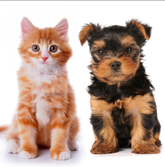 Friends For Life Pets Kittens And Puppies Animals