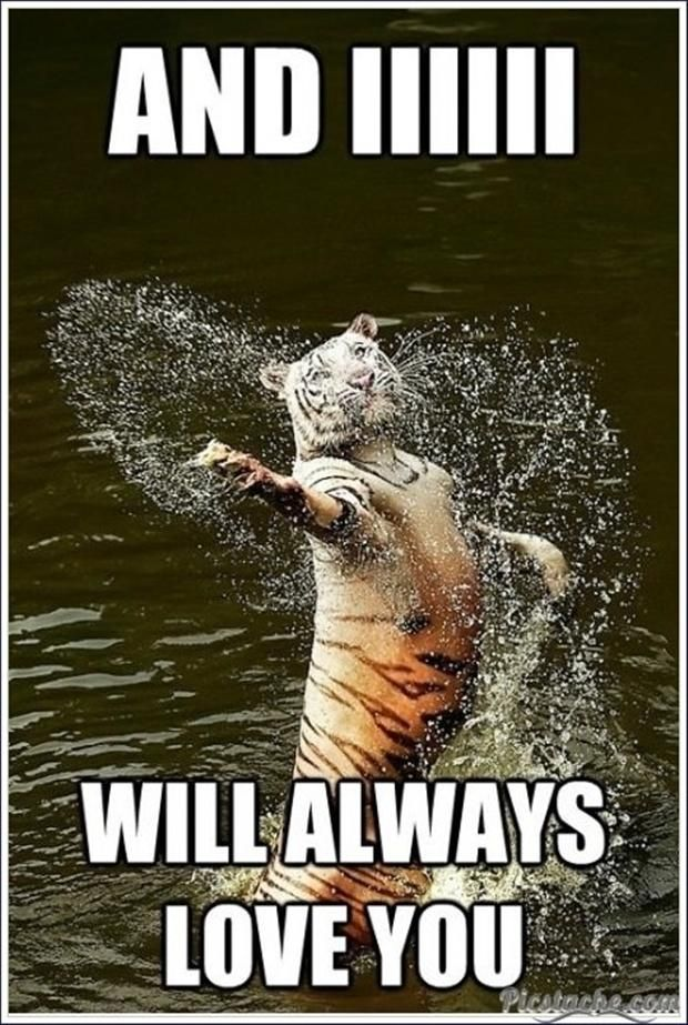 I Will Always Love You Funny Animals Dump A Day Animal Captions Funny Animals Funny Animal Memes