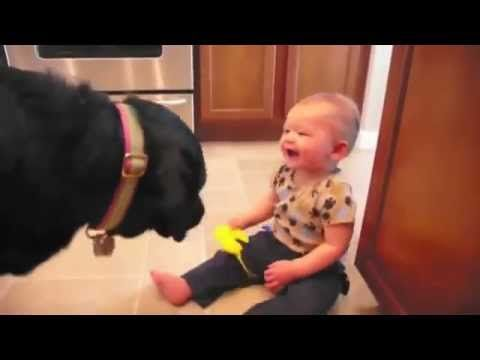 Labrador Bambini ~ Labrador e bambini amore innocente! animali pinterest labradors