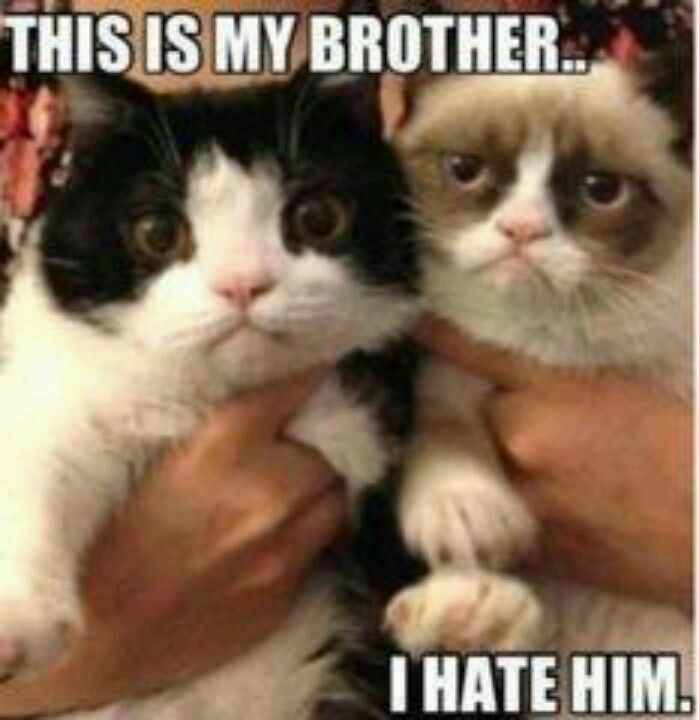 Brothers and sisters I hate mine too sometimes | Grumpy ... Loathe Cat