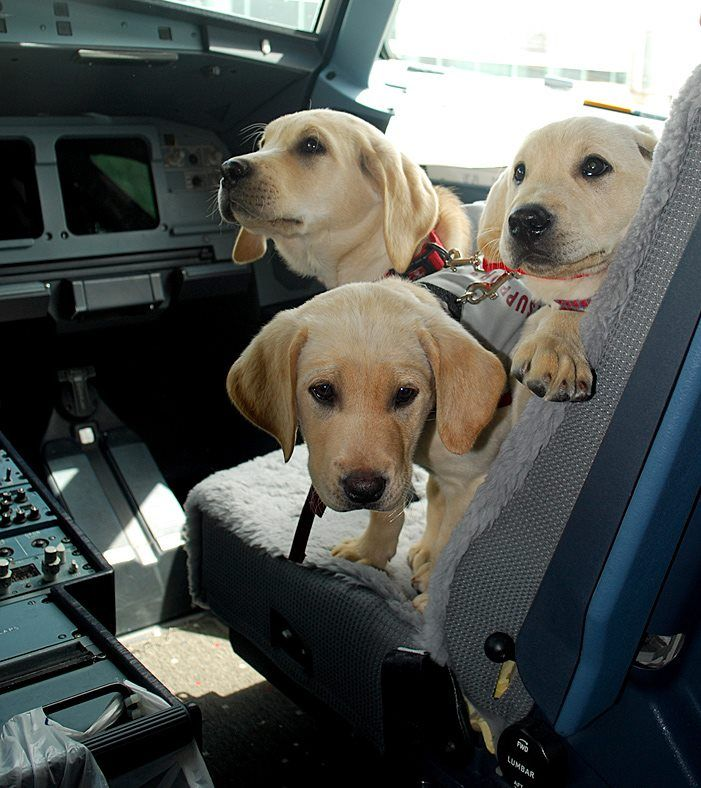 Zeppelin mac denver on the flight deck did you know us for Small dogs on airplanes
