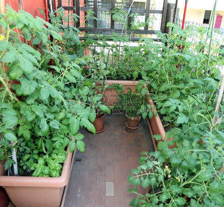 Vegetable Garden On The Balcony Urban Garden In The 400 x 300