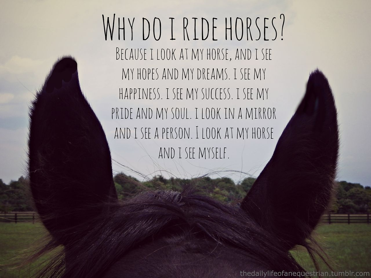 Pics photos quote i wrote for my horse com account s equestrian - Why Do I Ride Horses Because I Look At My Horse And I See