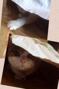 Dash Cat boarding melbourne