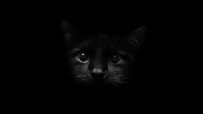 30 Beautiful Black Wallpapers For Your Desktop Black Cat Images Cat Background Cat Wallpaper