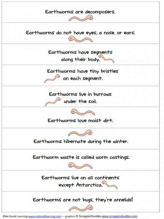The No Doubt Learning Shop On Teachersnotebook Com Worms Preschool Worm Facts Earthworms