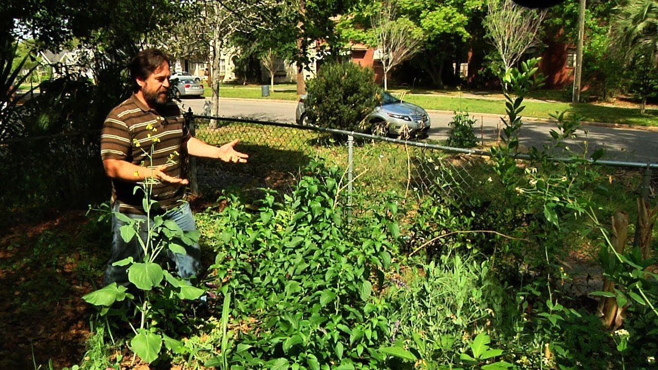 Permaculture Paradise: Tour of Alex's Permagarden (With ...