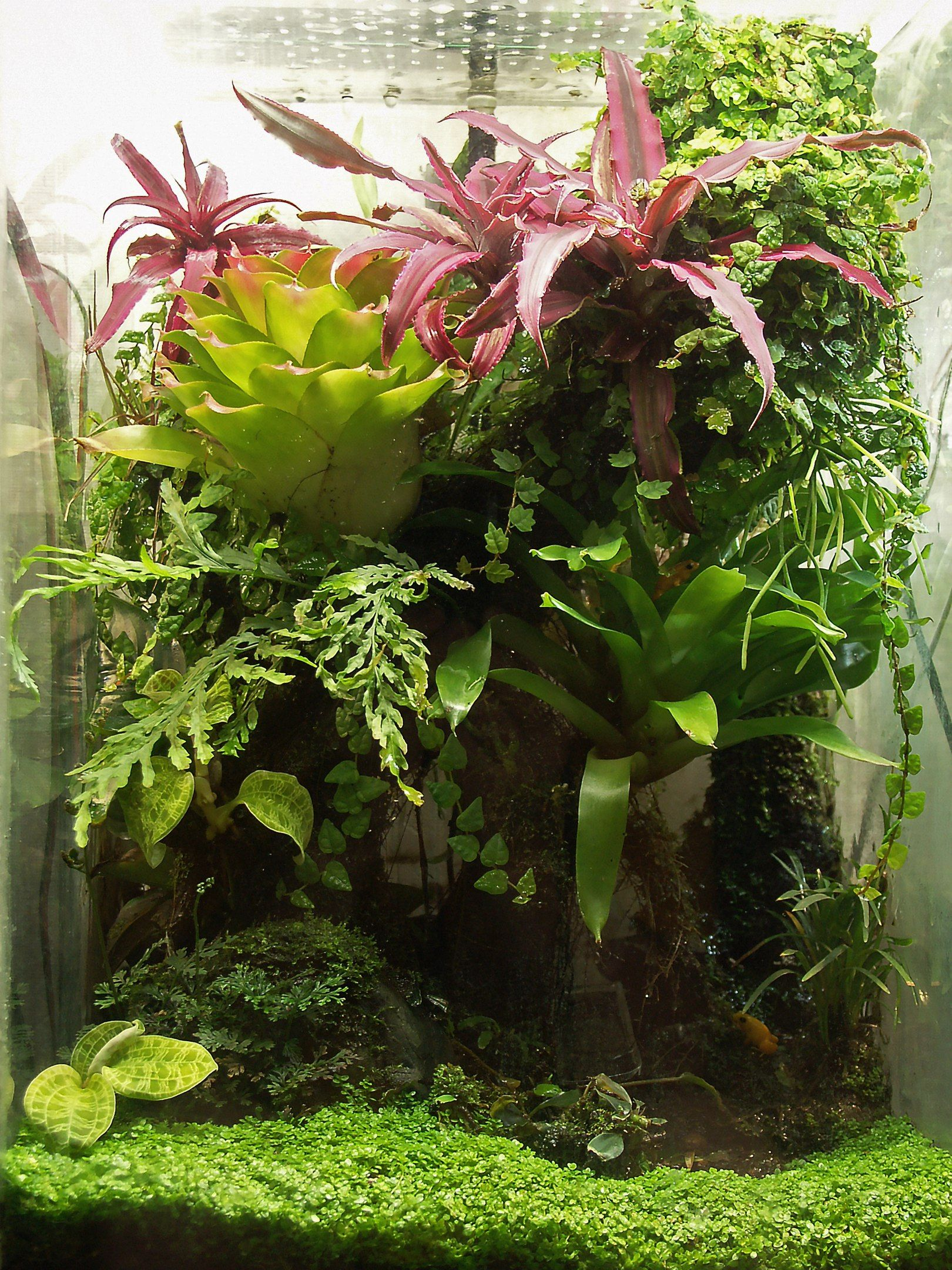 Jury che viva pinterest vivarium terraria and aquariums
