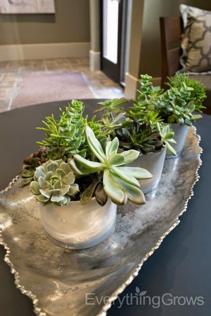 Everything Grows We Re Jumping With Model Home Requests Low Maintenance Indoor Plants Model Homes Succulents