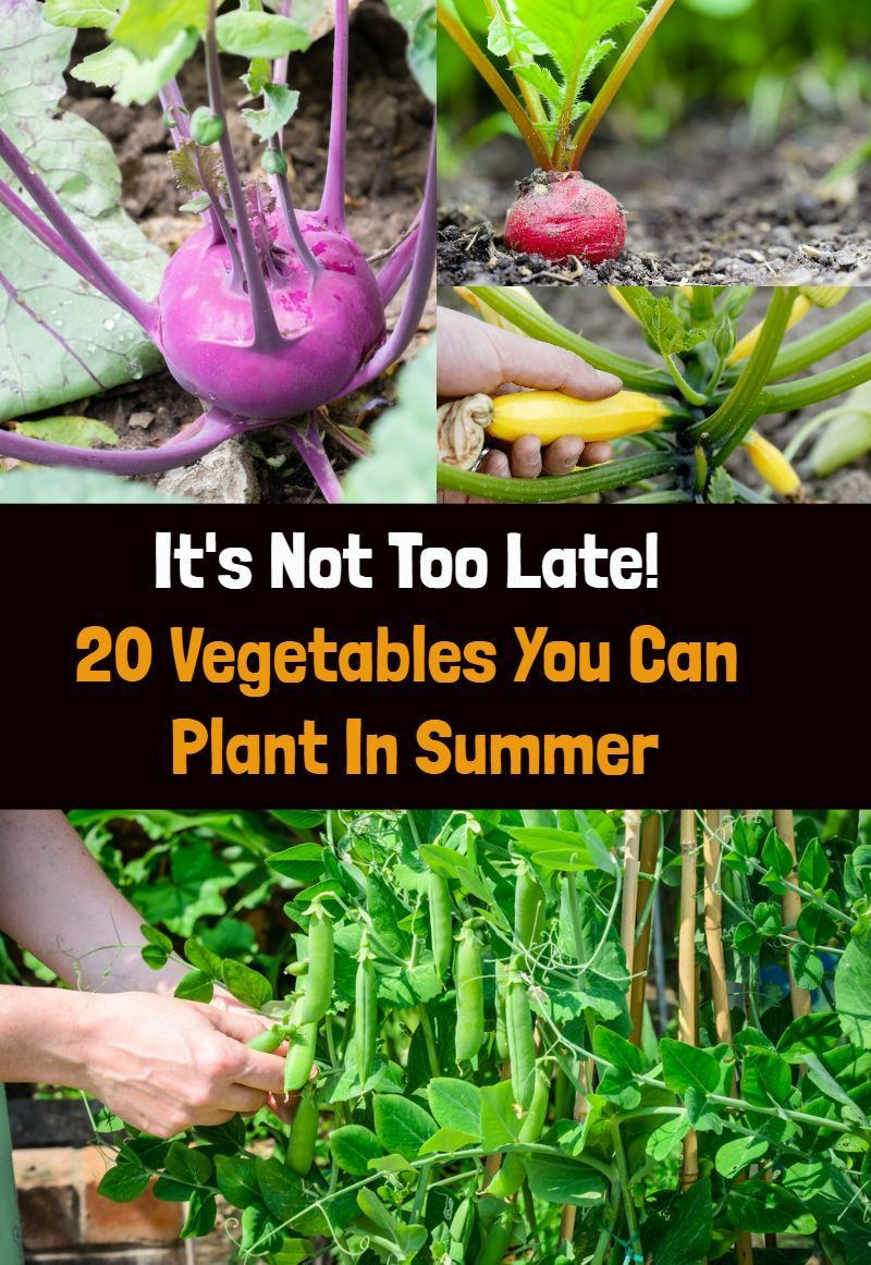 It S Not Too Late 20 Vegetables You Can Plant In Summer Summer