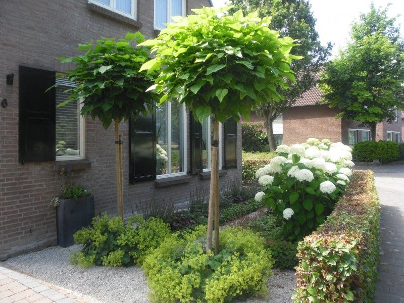 Leibomen voortuin google zoeken voortuin pinterest for Landelijke stadstuin