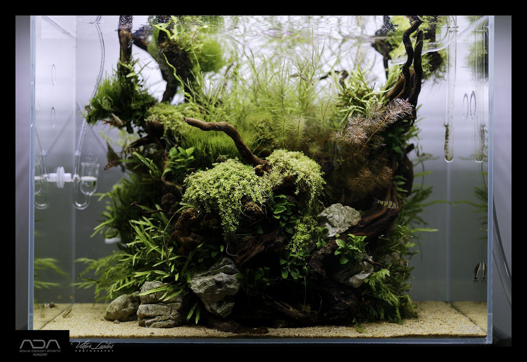 Aquascaping Planted Tank Planted Aquarium Aquascape Nature Aquarium